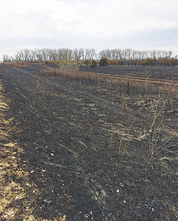 A SECTION of approximately a half mile including multiple tree belts burned in the early hours of Saturday morning. The fire was mostly kept from spreading too far east and west, but instead followed the Letcher oil road north and south. Four area departments assisted in extinguishing the blaze.