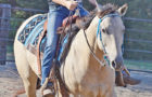Caycee Guinn takes her horse through the various turns and paces at the Fun Horse Show.